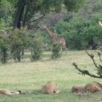 Top 3 des endroits les plus incontournables pour un séjour au Botswana